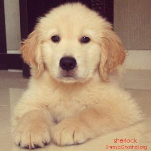 cute sherlock