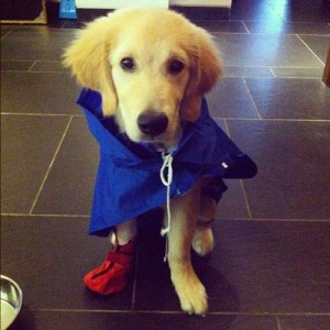sherlock is ready for munsoon walk