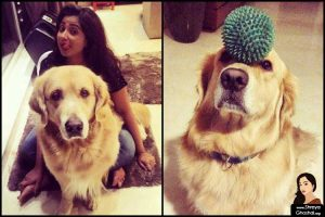 Shreya Ghoshal's Golden Retriever is the goofiest Sherlock